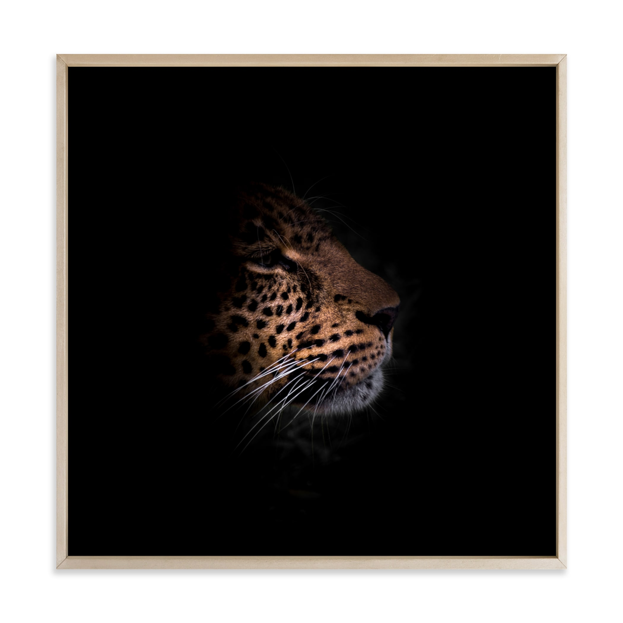 Siri The Leopard Art Print