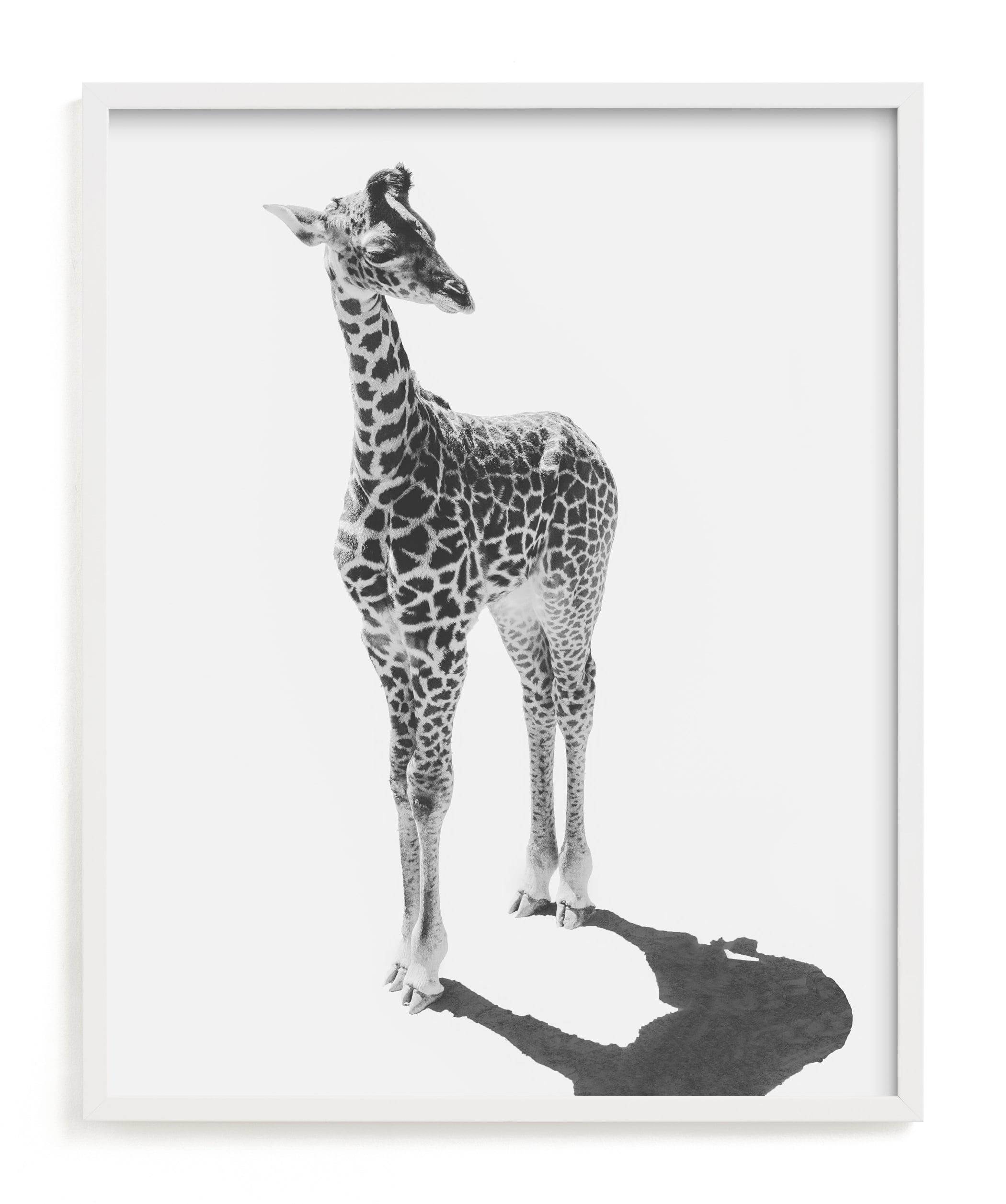 """""""Baby Giraffe"""" - Limited Edition Art Print by Kamala Nahas in beautiful frame options and a variety of sizes."""