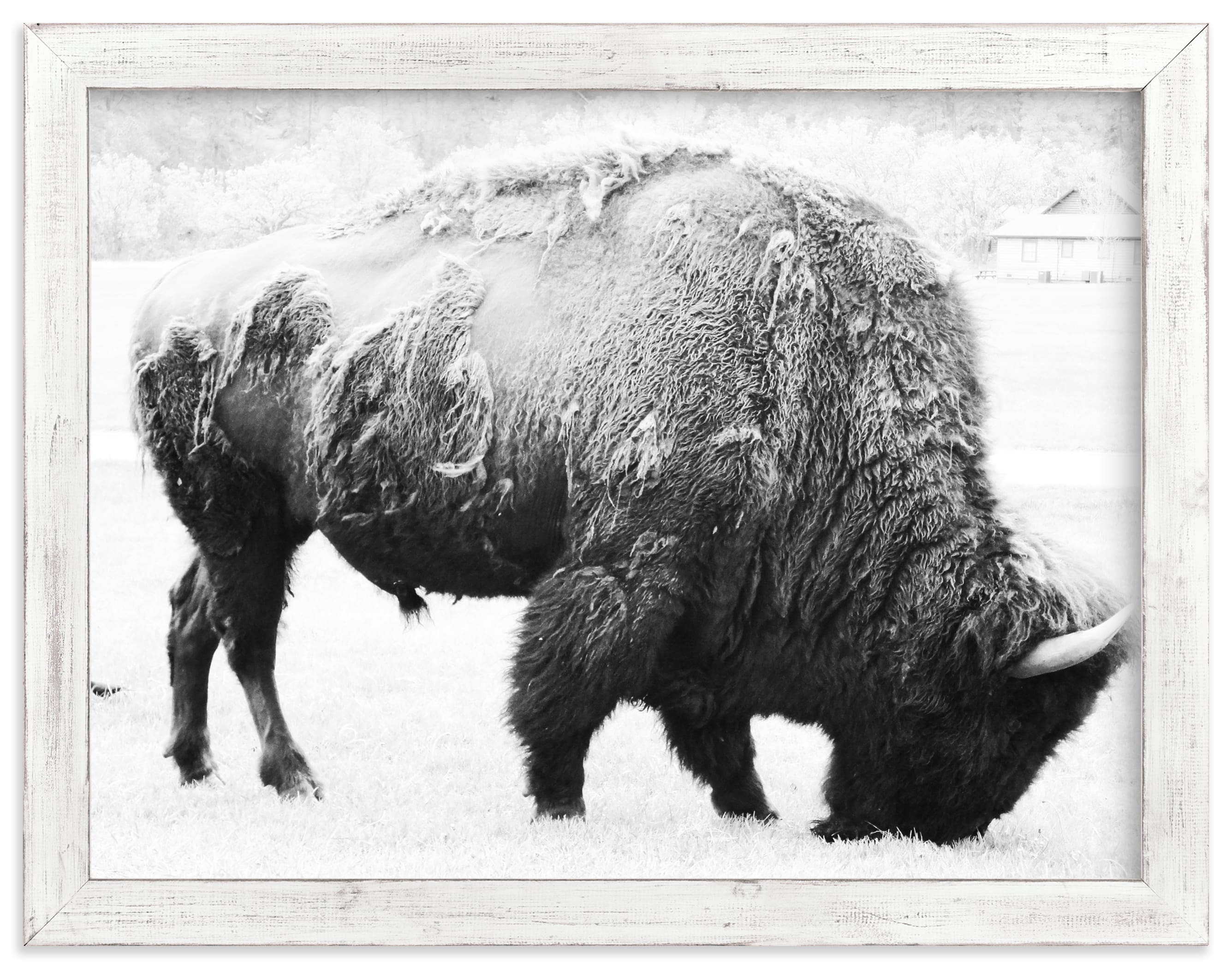 """""""Living Remnants of the Not-So-Distant Past"""" - Limited Edition Art Print by Shannon Dunlap in beautiful frame options and a variety of sizes."""