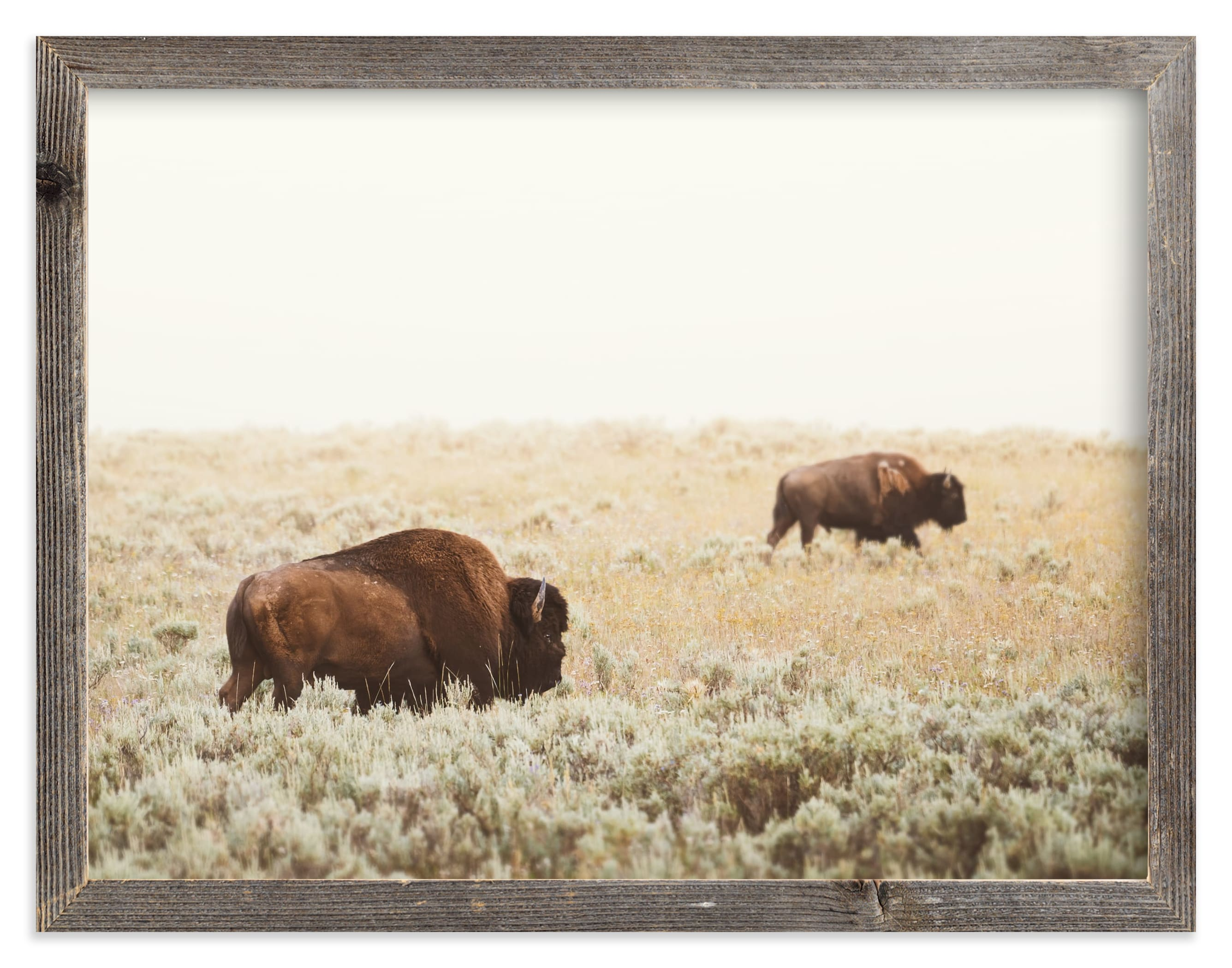 """Bison"" - Limited Edition Art Print by Kamala Nahas in beautiful frame options and a variety of sizes."