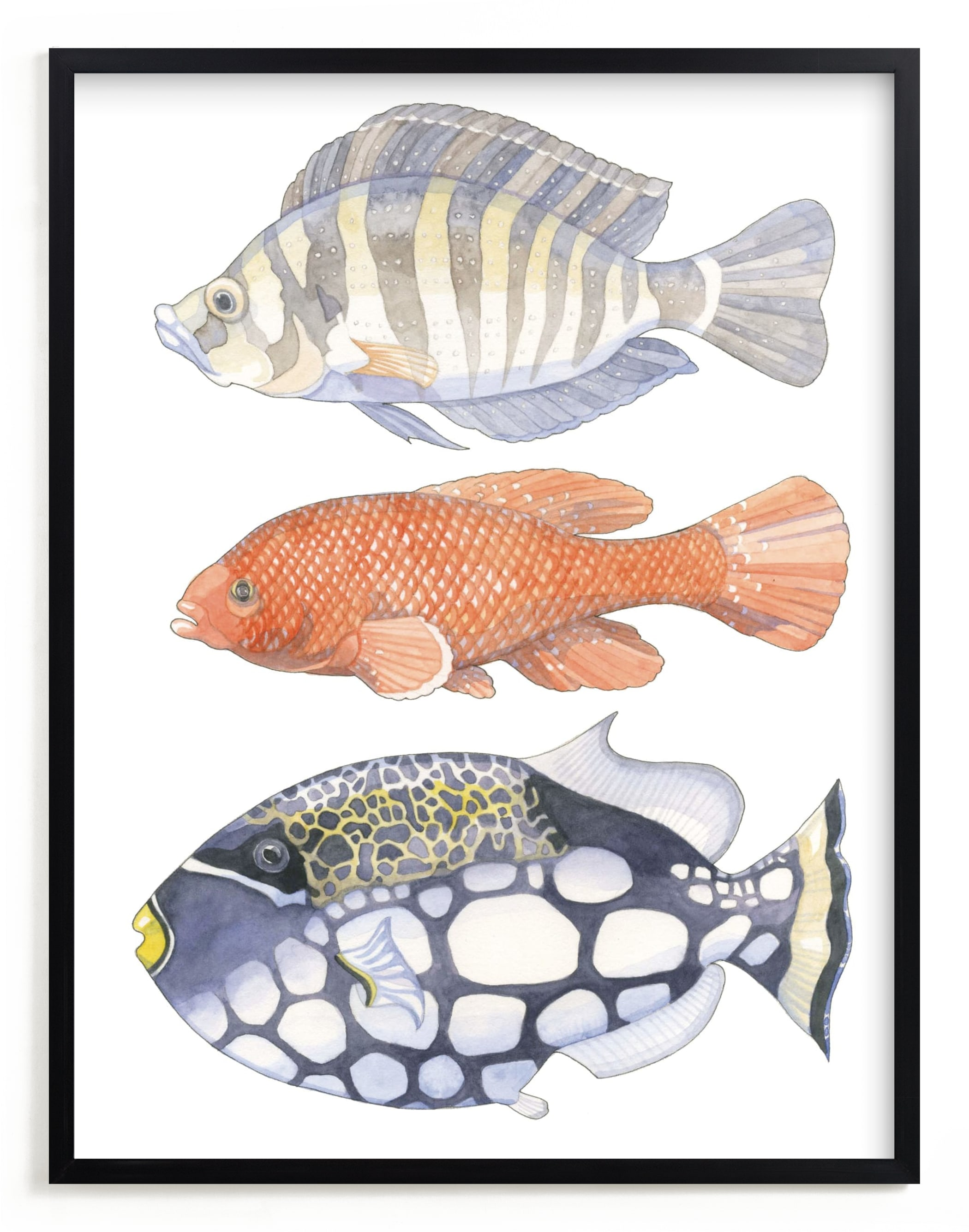"""""""Three Fish"""" - Limited Edition Art Print by Natalie Groves in beautiful frame options and a variety of sizes."""