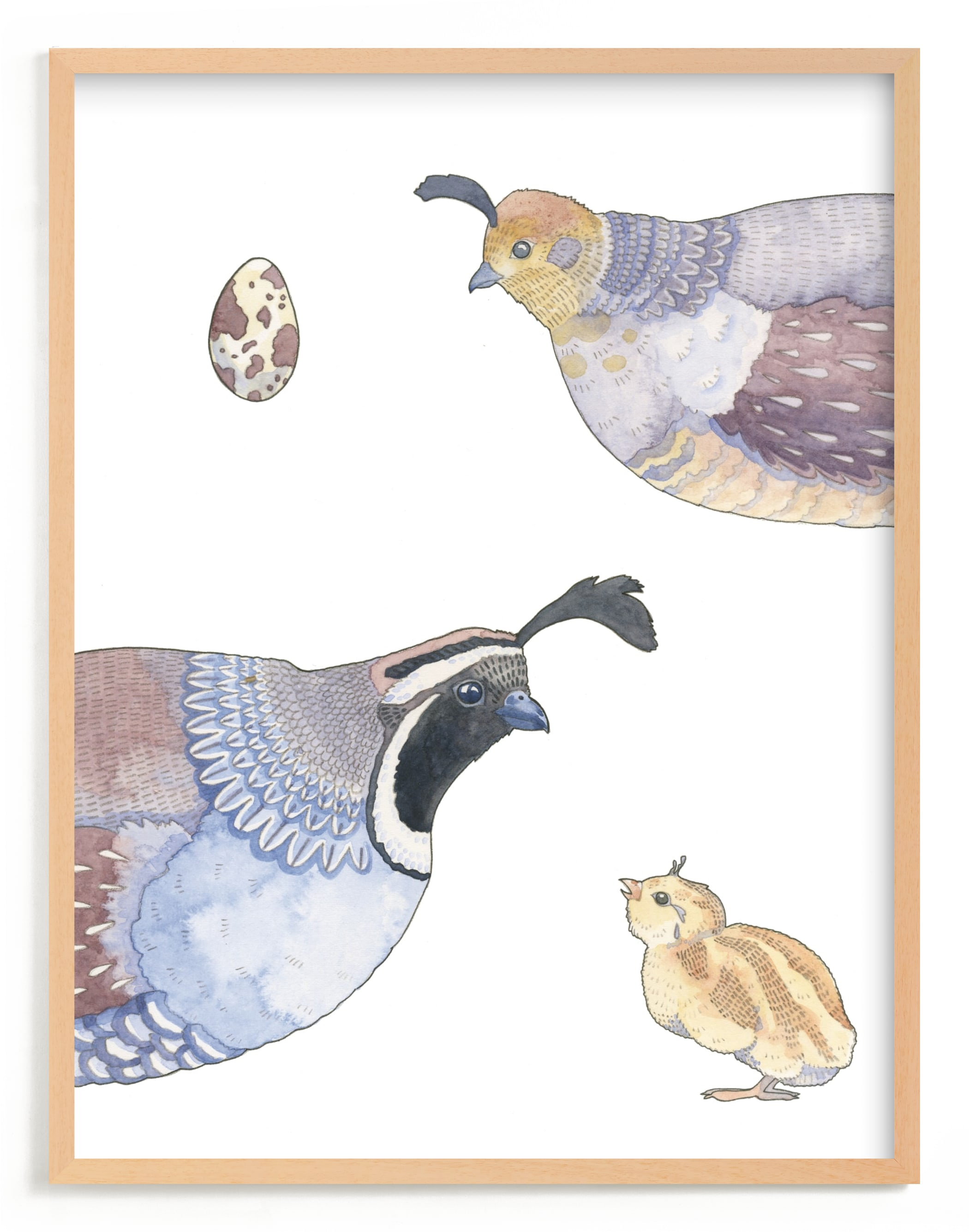 """The Quail Family"" - Limited Edition Art Print by Natalie Groves in beautiful frame options and a variety of sizes."