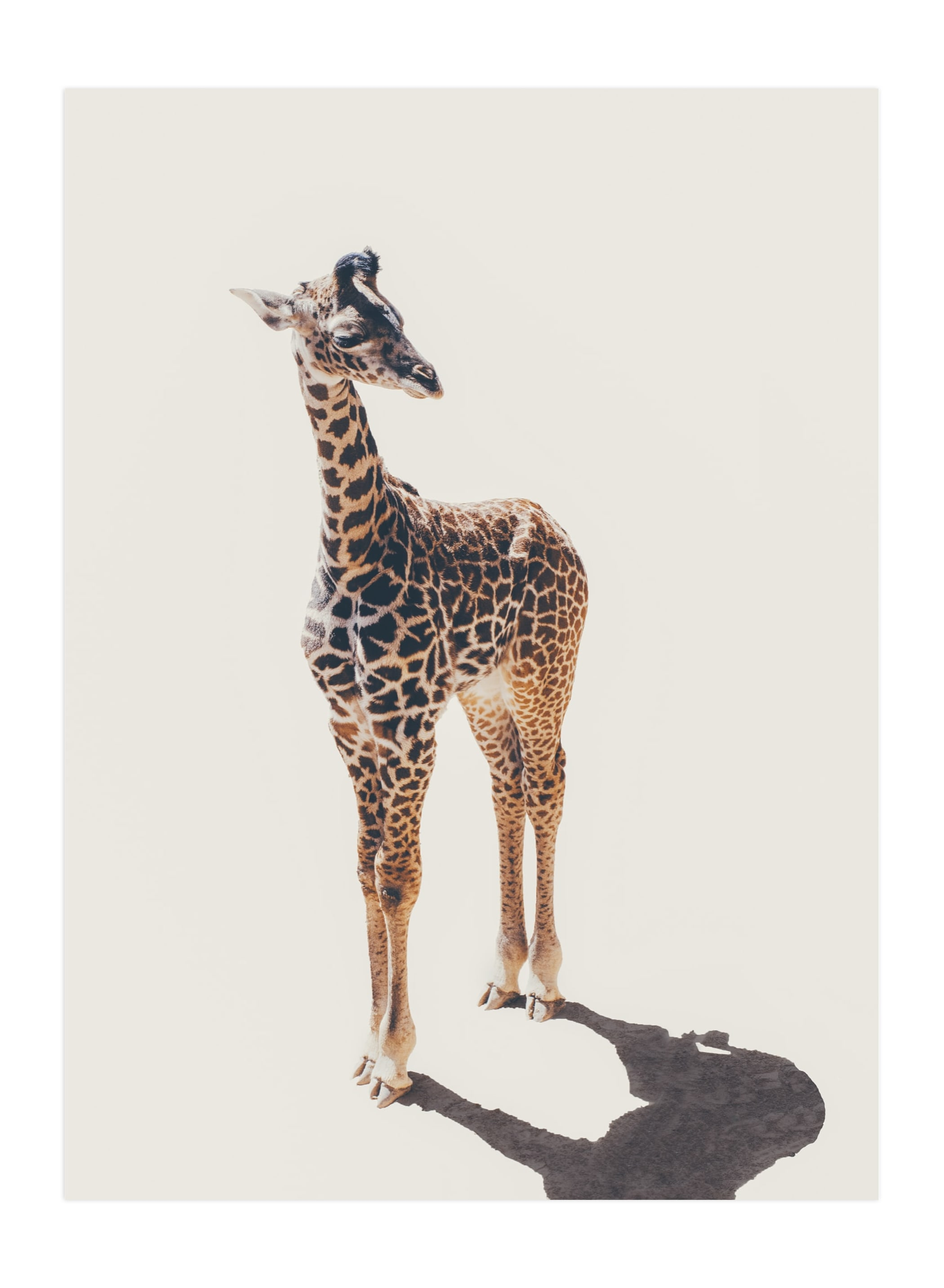 """Baby Giraffe"" - Limited Edition Art Print by Kamala Nahas in beautiful frame options and a variety of sizes."
