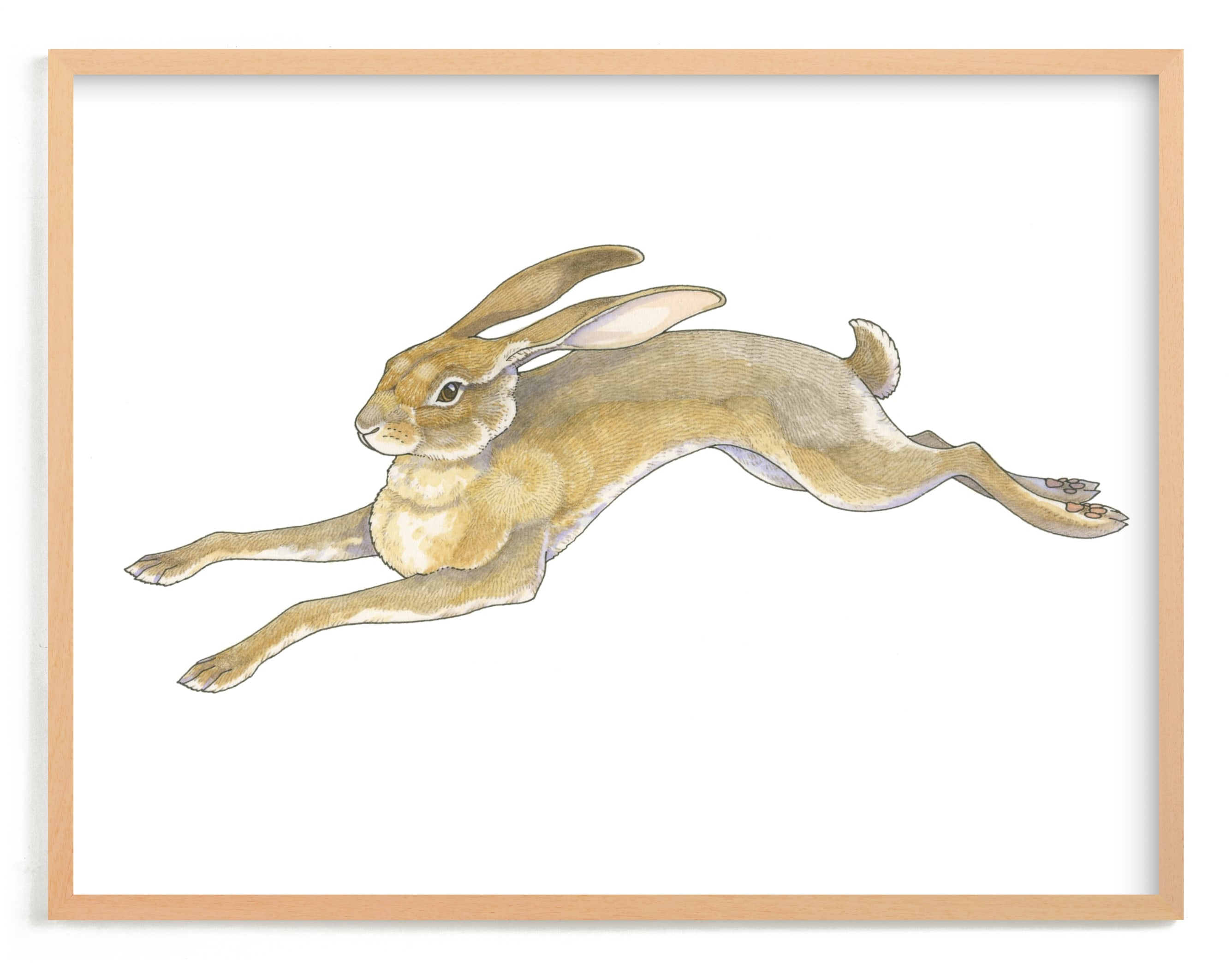 """""""Wild Hare"""" - Limited Edition Art Print by Natalie Groves in beautiful frame options and a variety of sizes."""