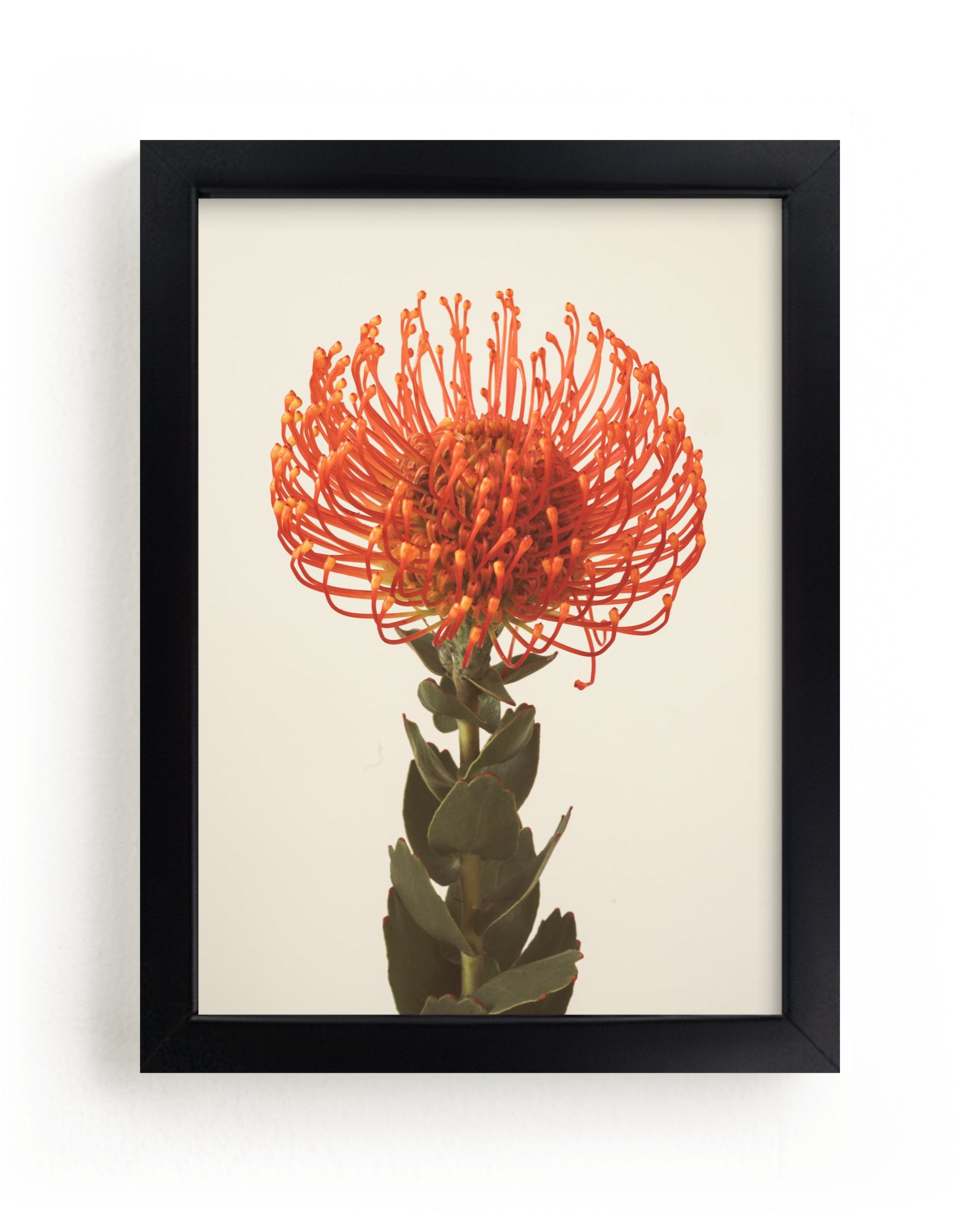 """""""Protea I"""" - Limited Edition Art Print by Kamala Nahas in beautiful frame options and a variety of sizes."""