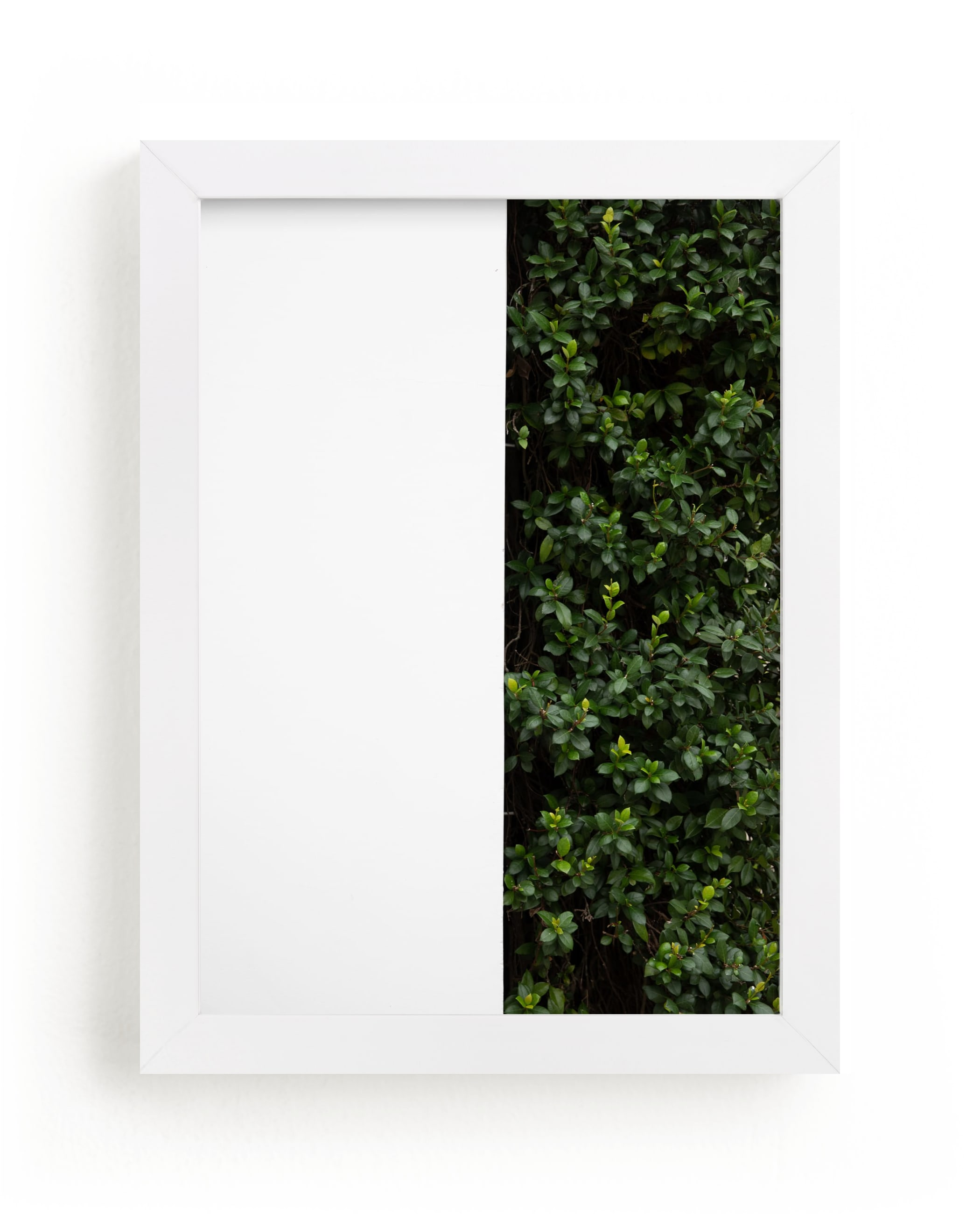 """""""verdant garden III"""" - Limited Edition Art Print by Sara Hicks Malone in beautiful frame options and a variety of sizes."""