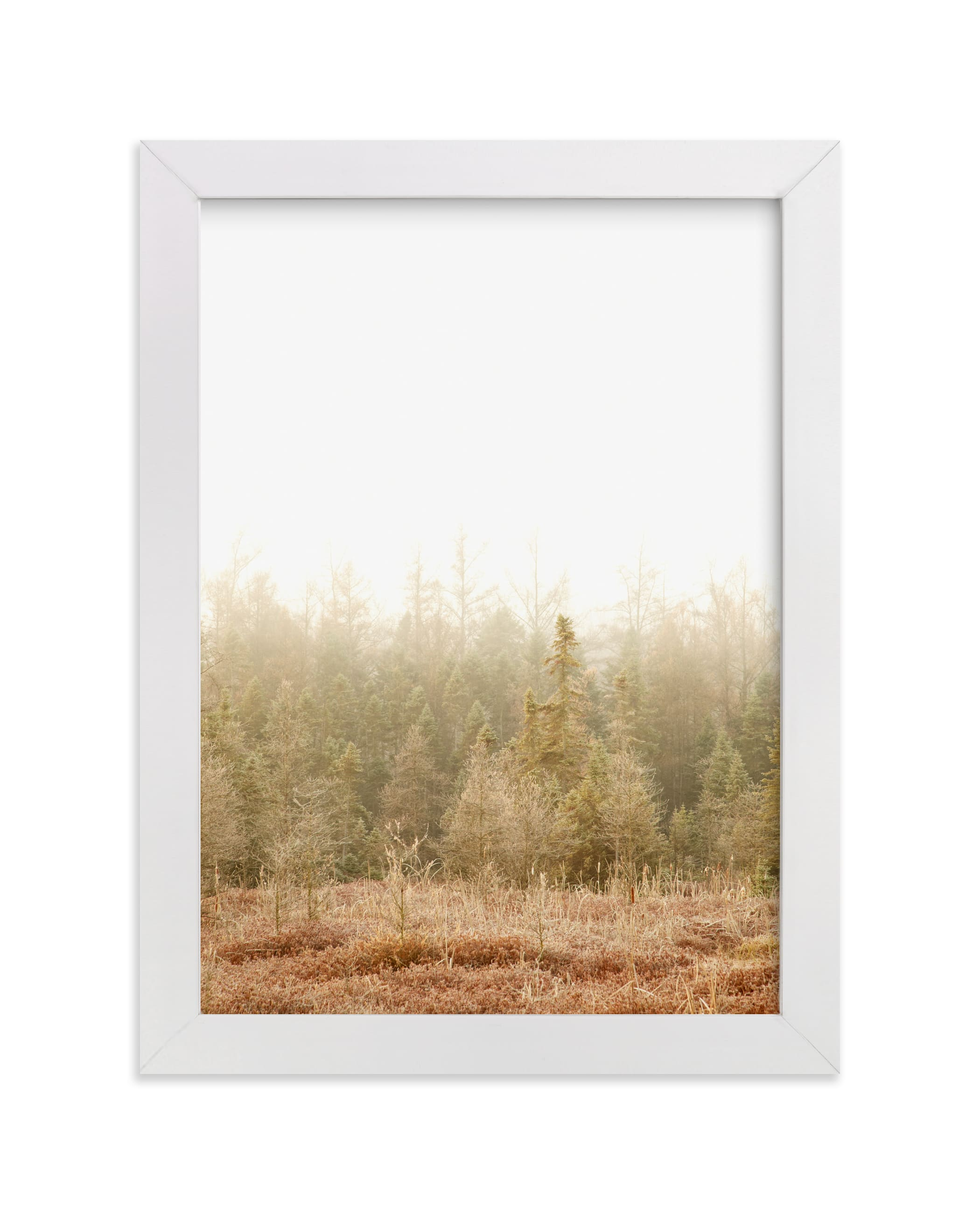 """""""Blushing Bog"""" - Limited Edition Art Print by Jennifer Squires in beautiful frame options and a variety of sizes."""