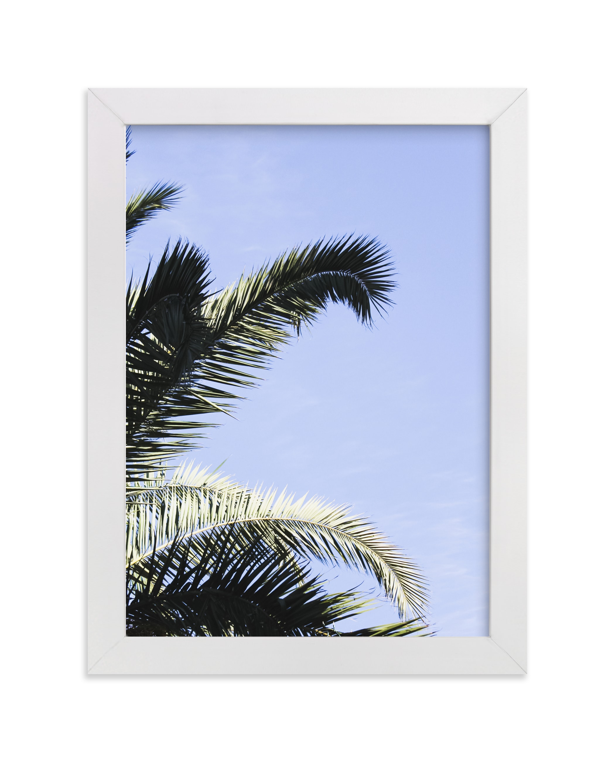 """""""Palm II"""" - Limited Edition Art Print by Annie Montgomery in beautiful frame options and a variety of sizes."""