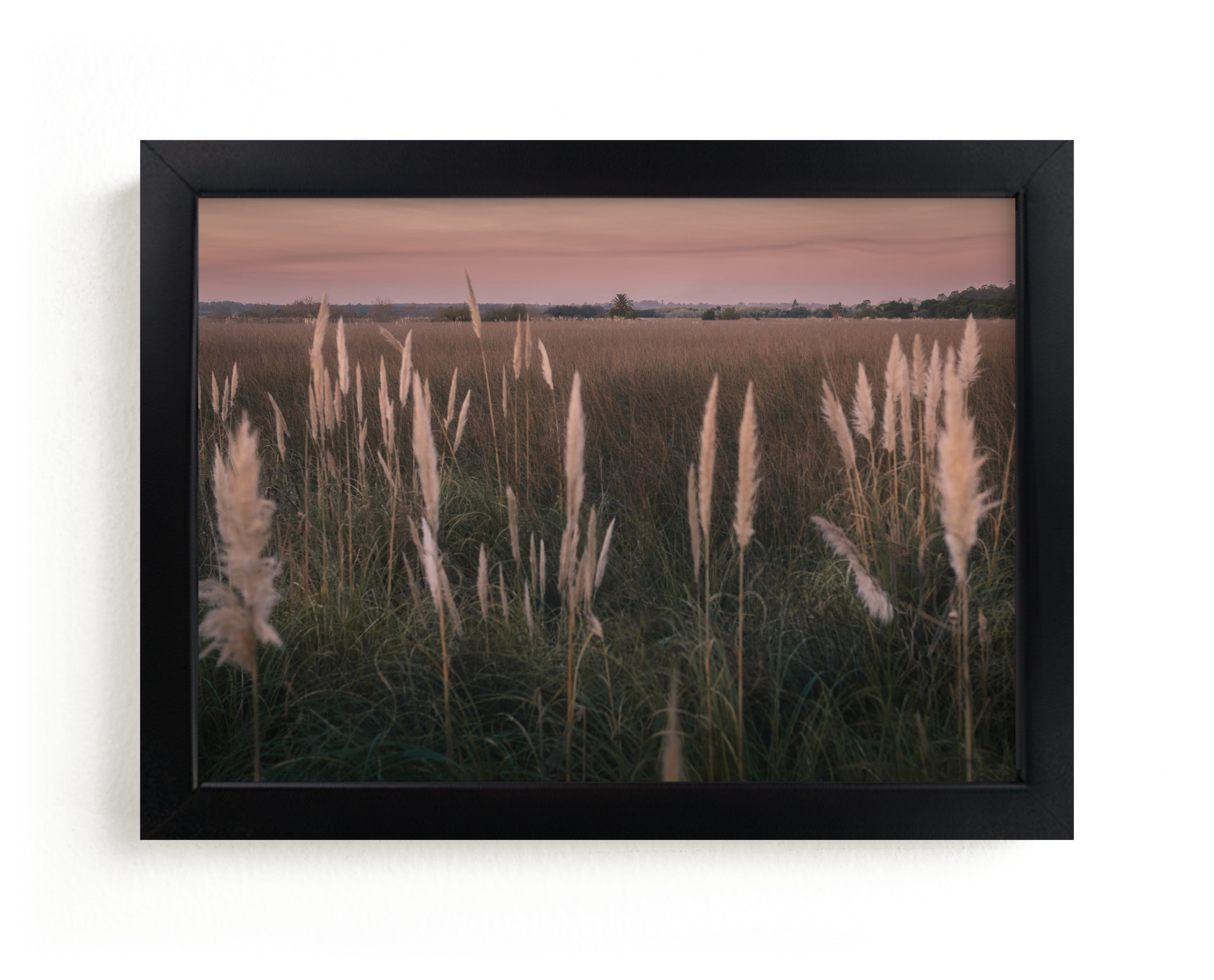 """""""Pampas grass"""" - Limited Edition Art Print by Lucia Coppola in beautiful frame options and a variety of sizes."""