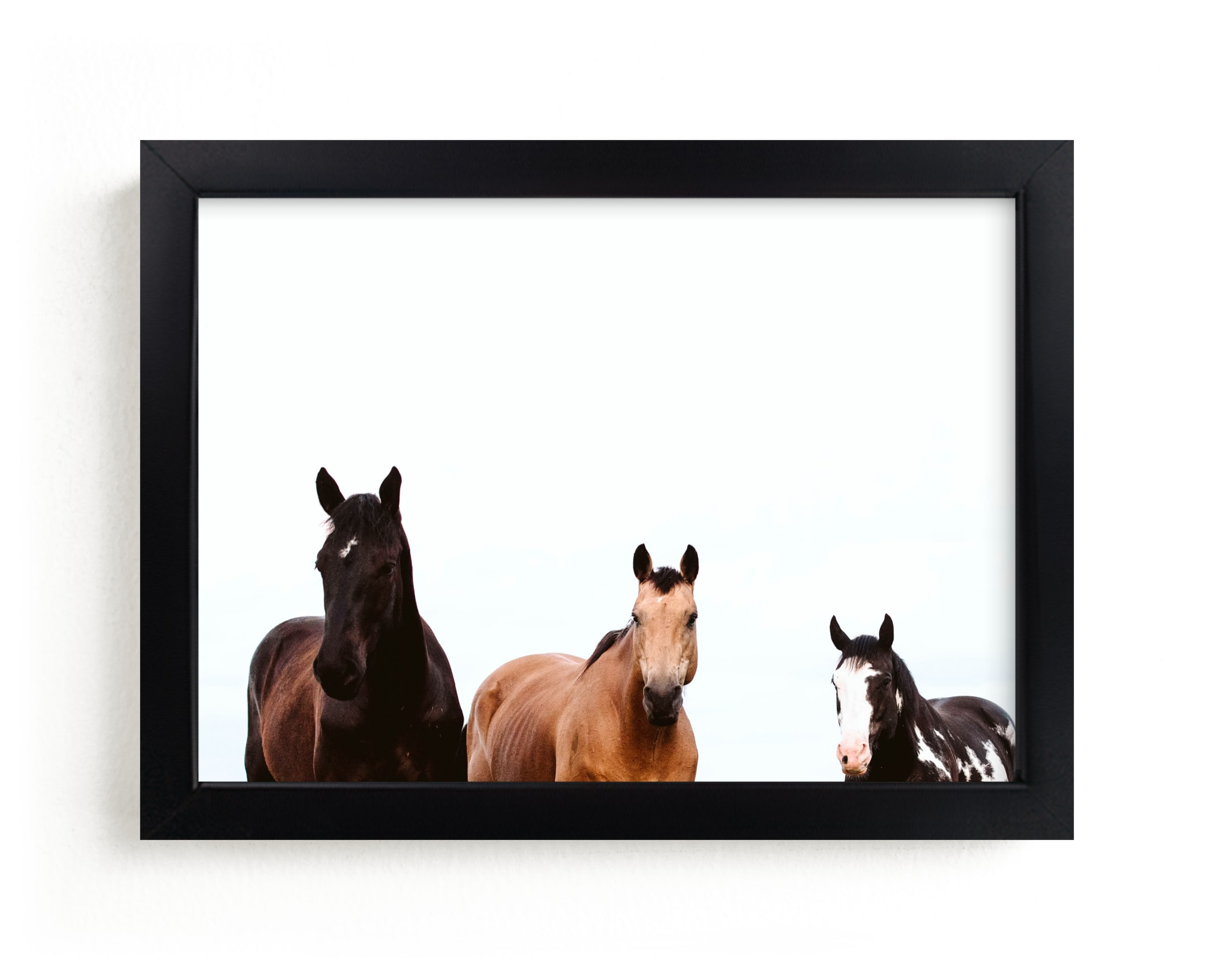 """The Three Amigos"" - Limited Edition Art Print by Amy Carroll in beautiful frame options and a variety of sizes."