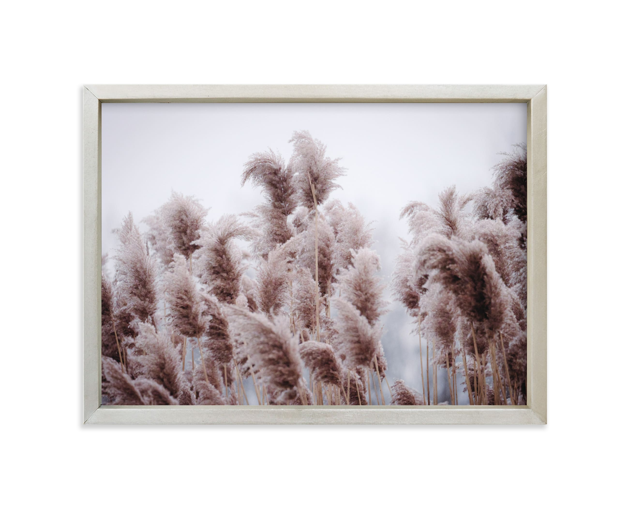 """""""Plumose"""" - Limited Edition Art Print by Robin Ott in beautiful frame options and a variety of sizes."""