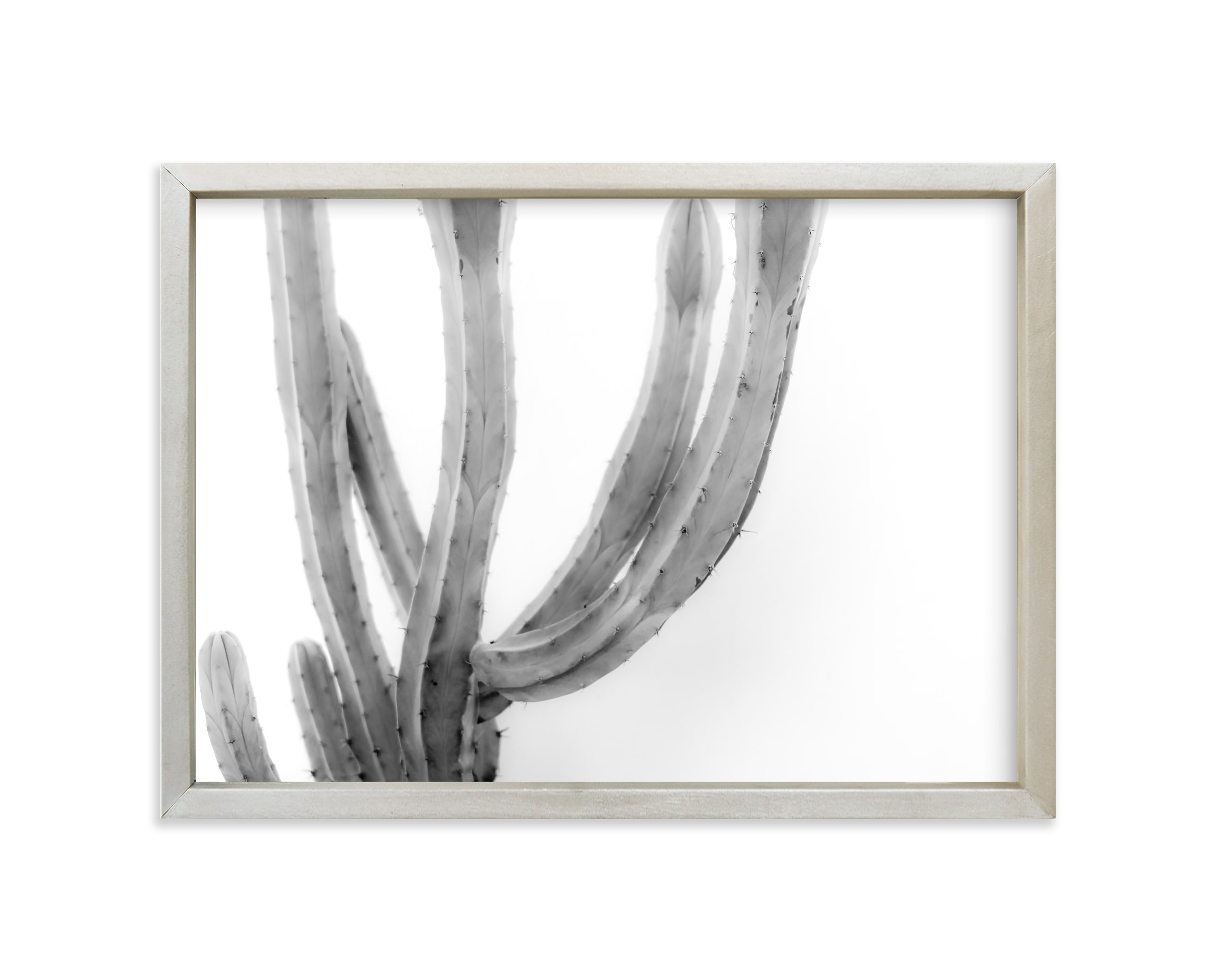 """Moorten Cactus Study 2"" - Limited Edition Art Print by Lisa Sundin in beautiful frame options and a variety of sizes."