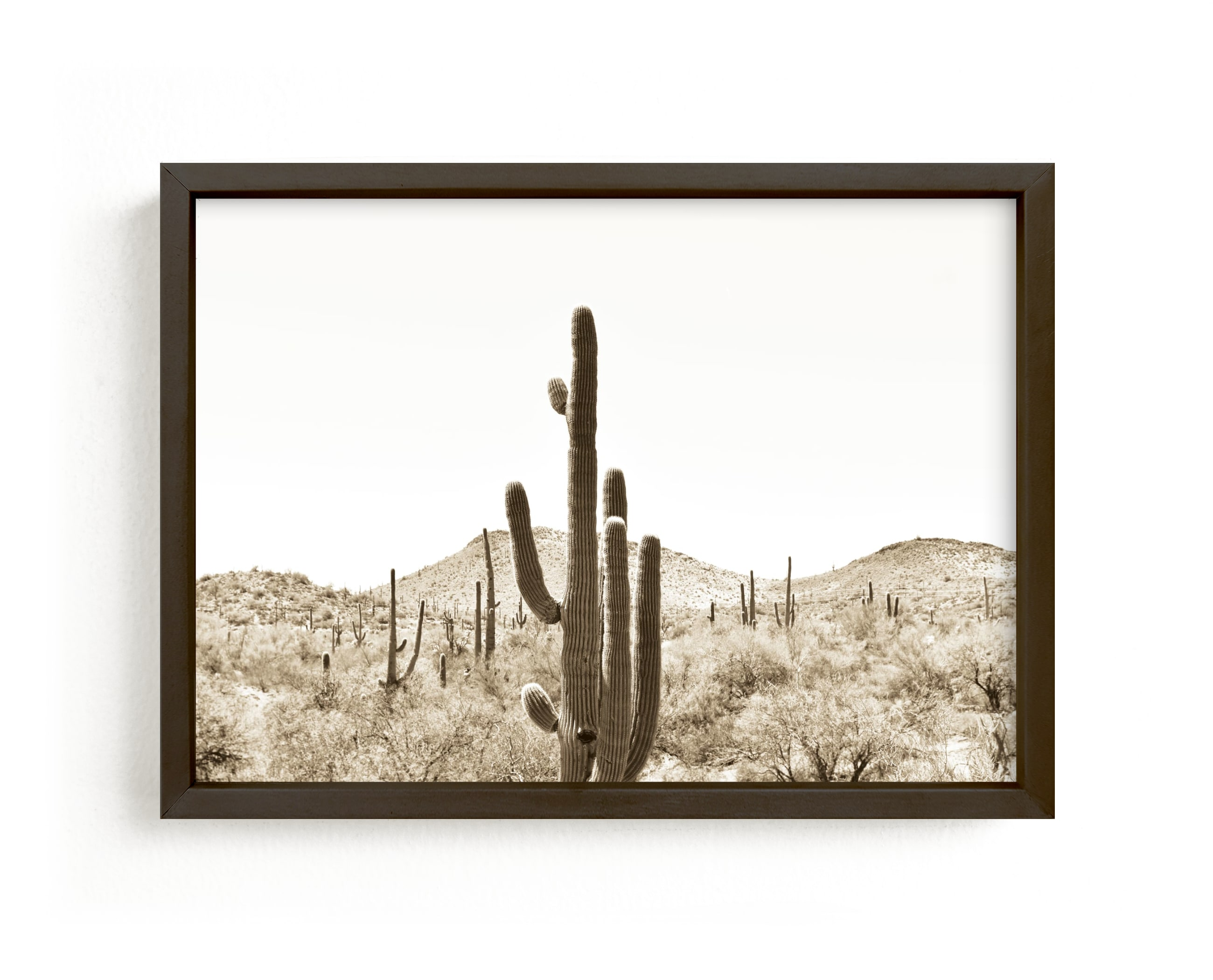 """""""Cacti V"""" - Limited Edition Art Print by Lisa Assenmacher in beautiful frame options and a variety of sizes."""