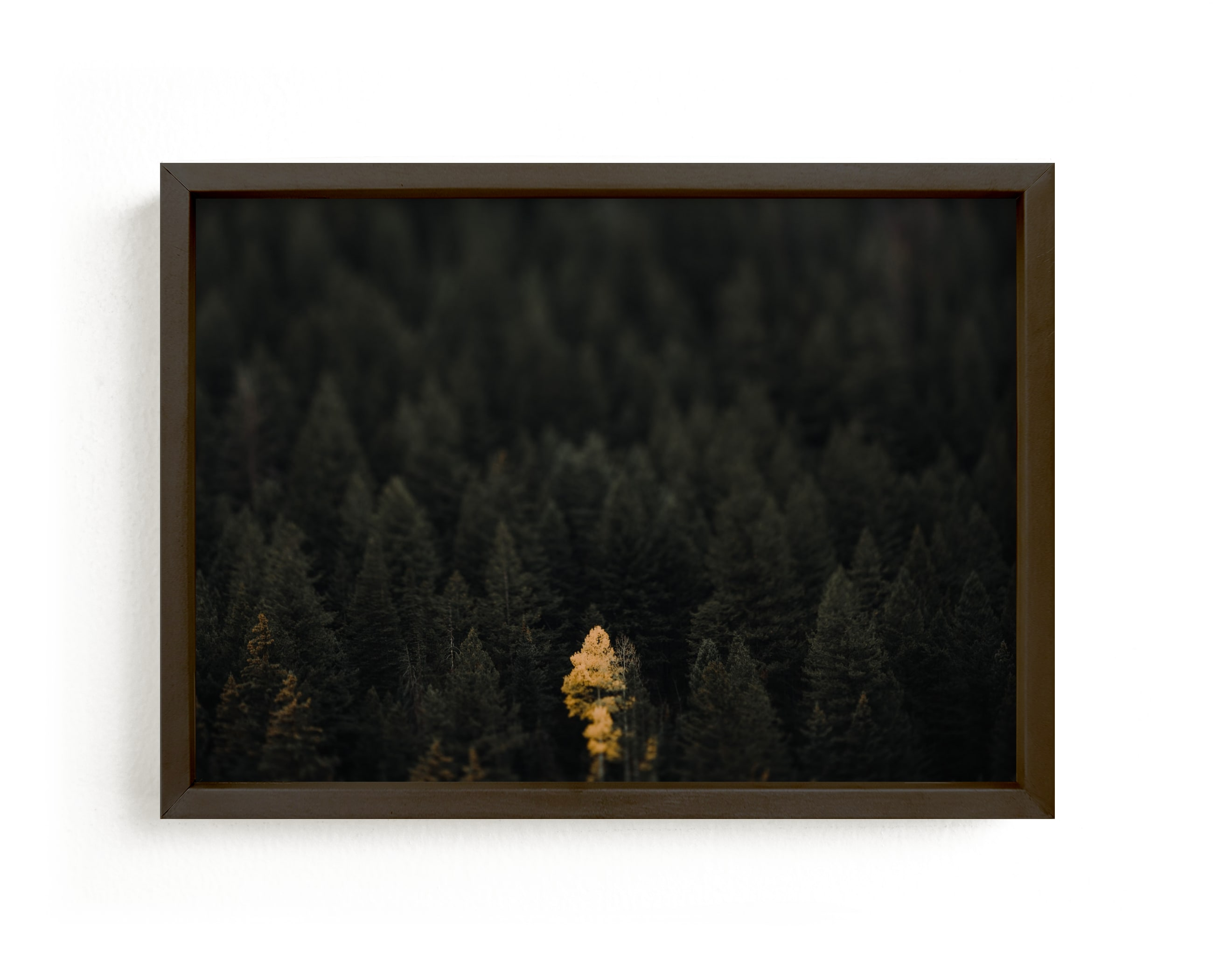 """the lone wolf"" - Limited Edition Art Print by Jacob Loafman in beautiful frame options and a variety of sizes."