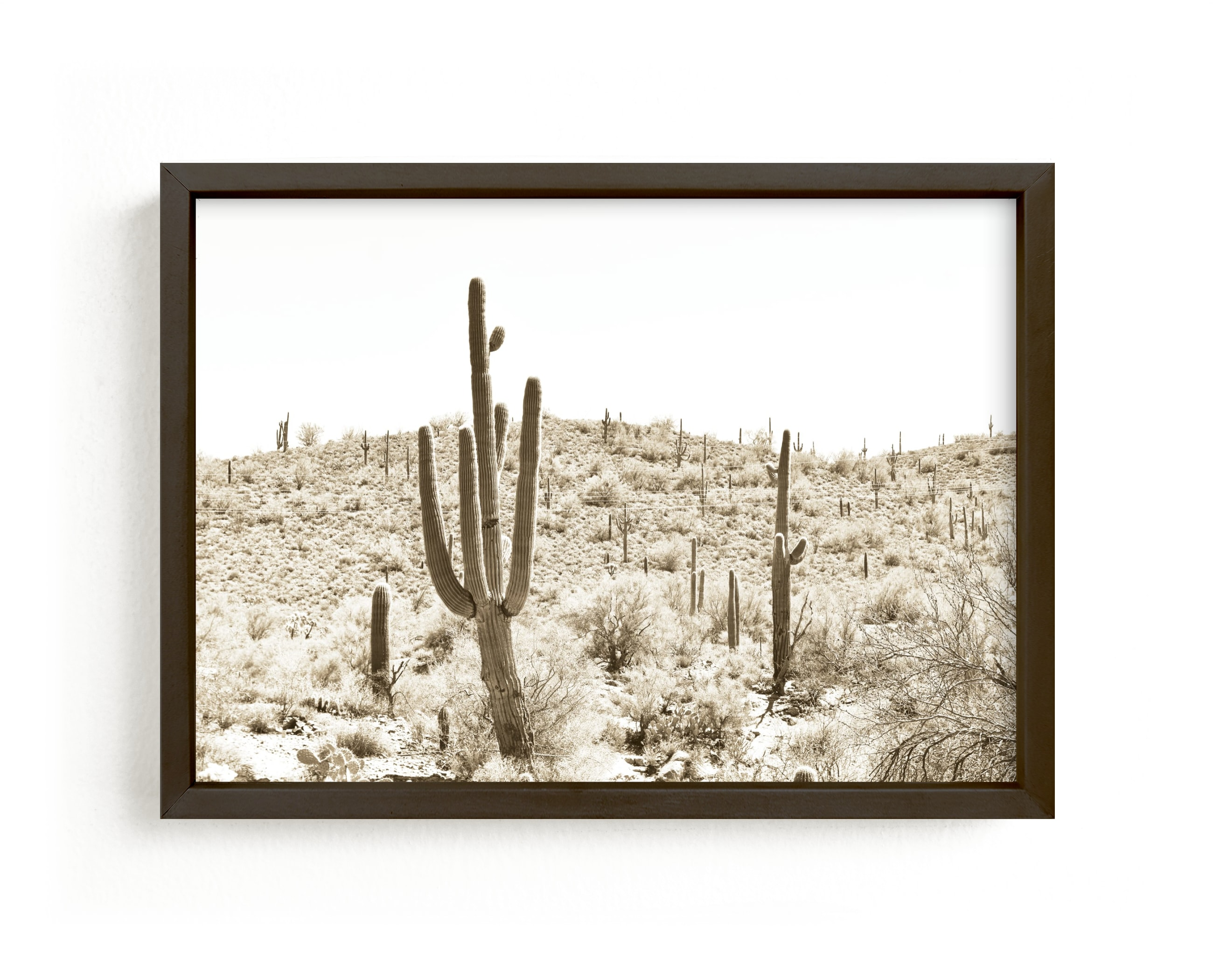 """Dusty Cacti"" - Limited Edition Art Print by Lisa Assenmacher in beautiful frame options and a variety of sizes."
