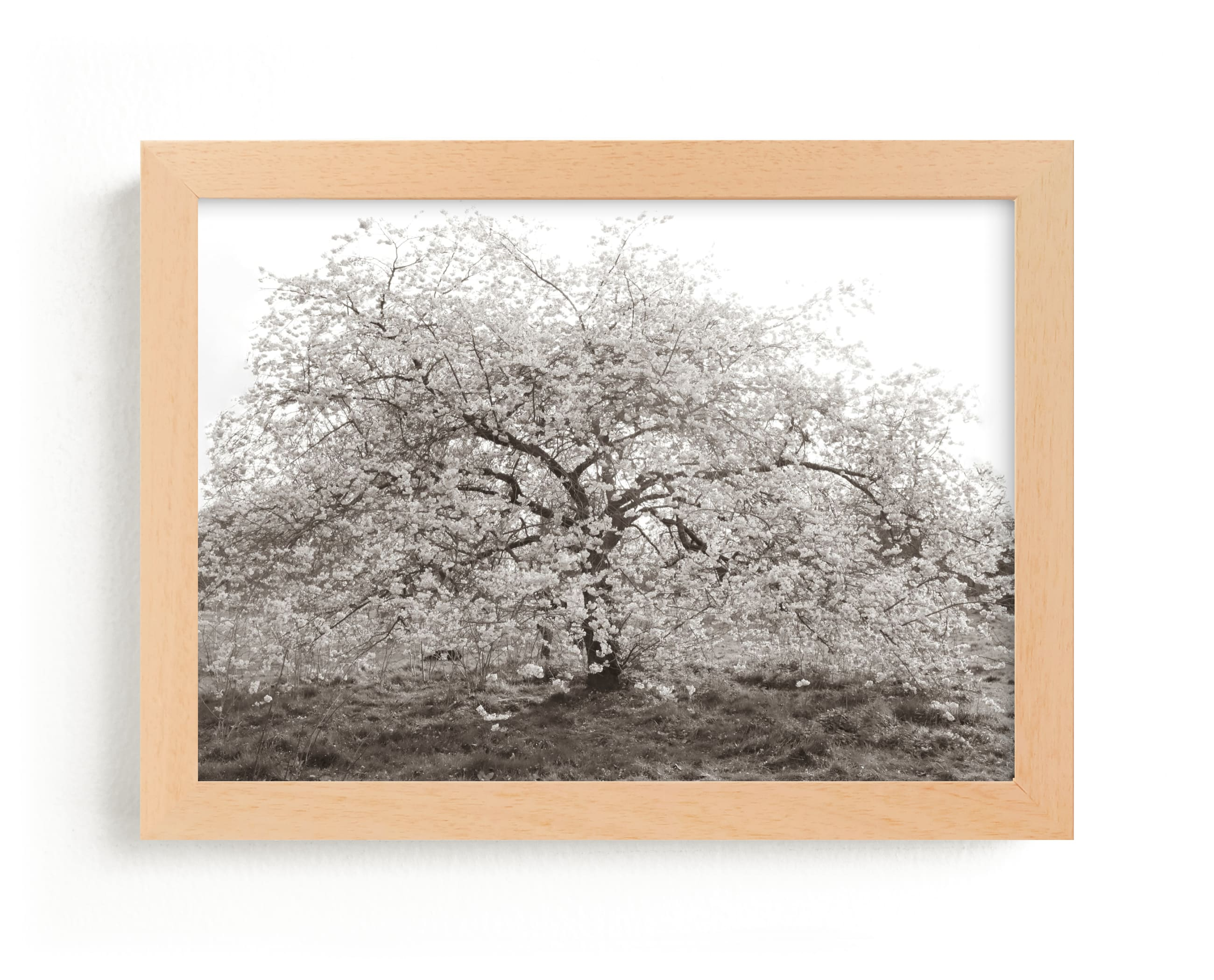 """""""bloom I"""" - Limited Edition Art Print by Sara Hicks Malone in beautiful frame options and a variety of sizes."""