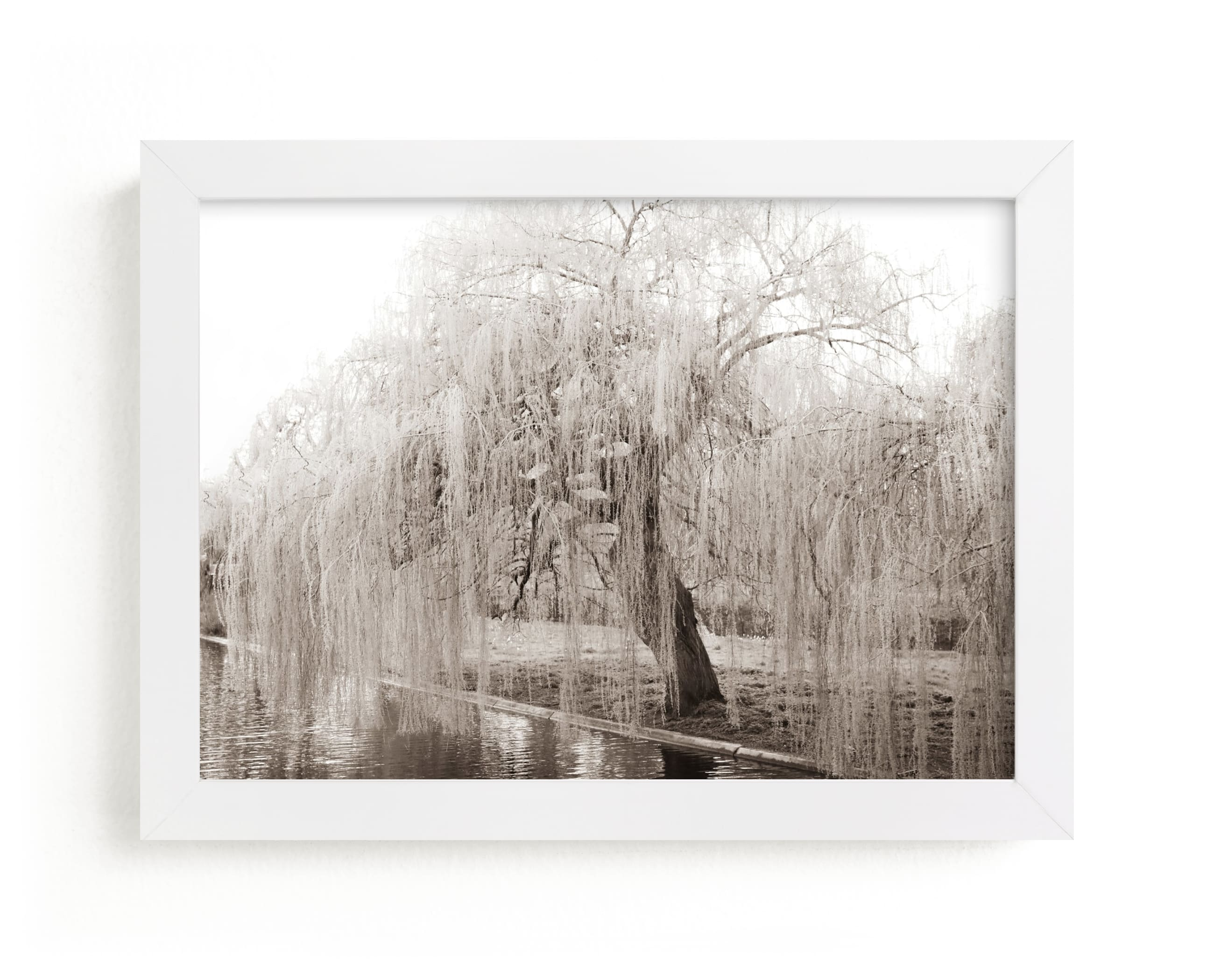 """""""bloom II"""" - Limited Edition Art Print by Sara Hicks Malone in beautiful frame options and a variety of sizes."""