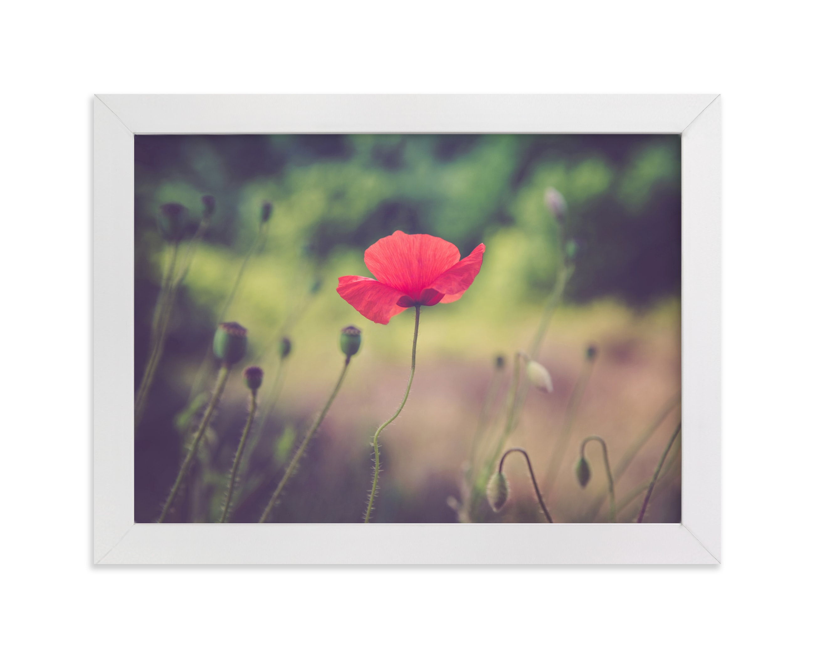 """""""Red Poppy Flower"""" - Art Print by Lying on the grass in beautiful frame options and a variety of sizes."""