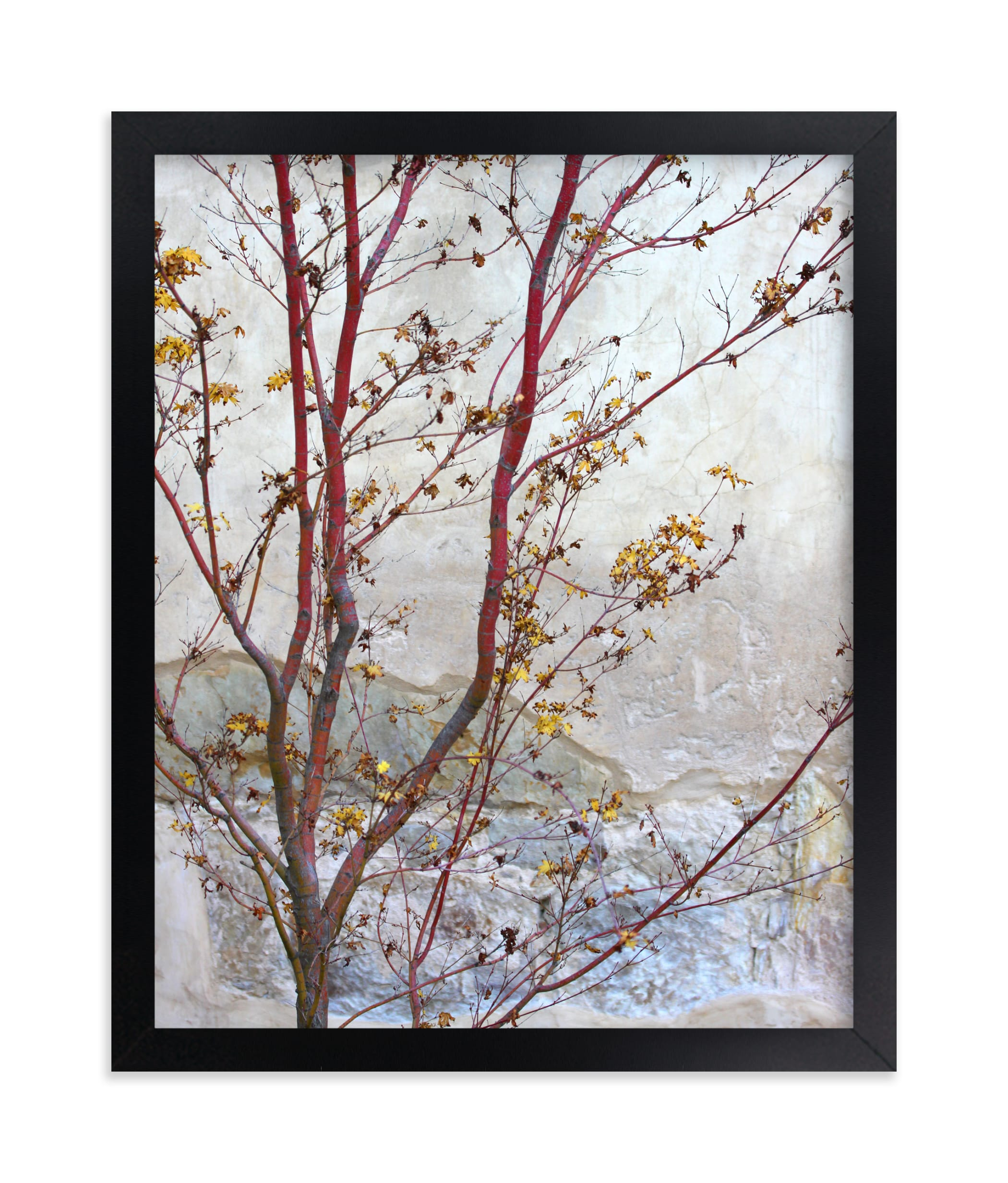 """Courtyard Maple"" - Limited Edition Art Print by Becky Nimoy in beautiful frame options and a variety of sizes."