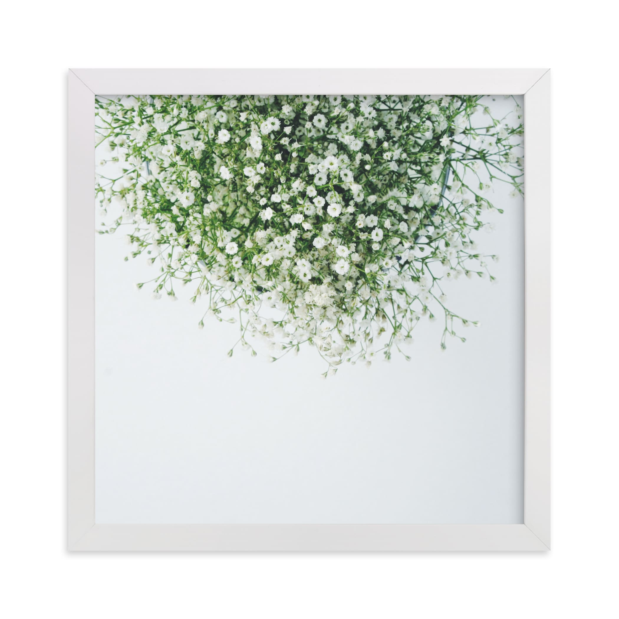 """""""Gypsophila"""" - Limited Edition Art Print by Marabou Design in beautiful frame options and a variety of sizes."""